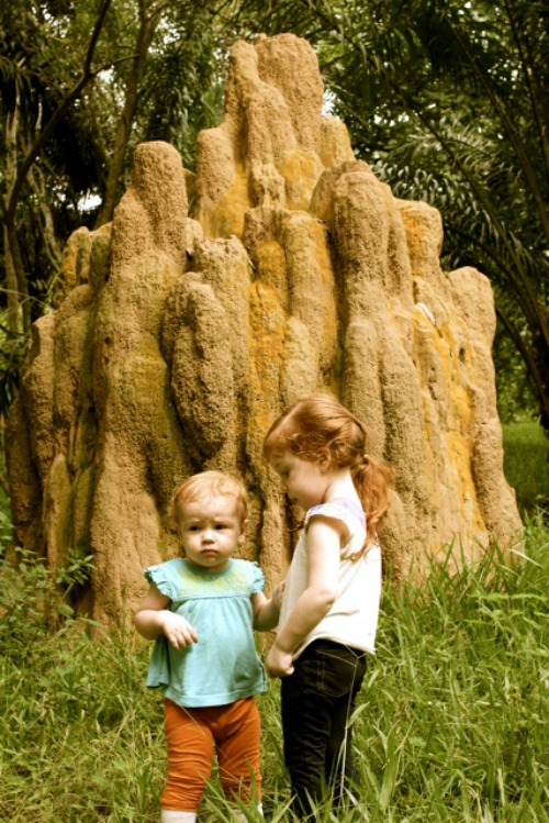 That's a termite mound, not a rock!